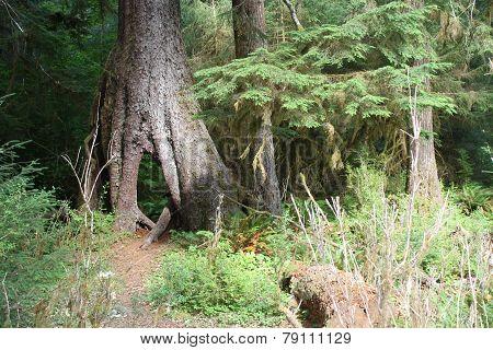 Magical Hoh Rain Forest