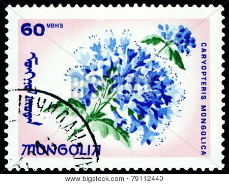 Vintage  Postage Stamp. The Flowerses Caryopteris Mongolica.