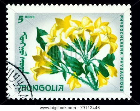 Vintage  Postage Stamp. The Flowerses Physochlaena Physaloides.