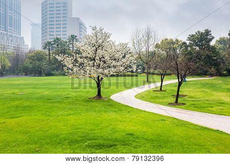 City Park In Spring