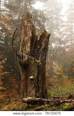 Autumn Tree Trunk