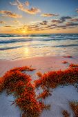 Colorful early sunrise over beautiful sea shore with a bright seaweed foreground poster