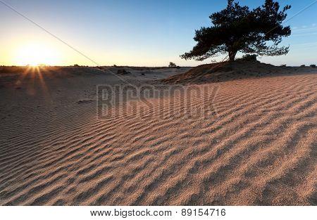 Sand Pattern In Morning Sunshine