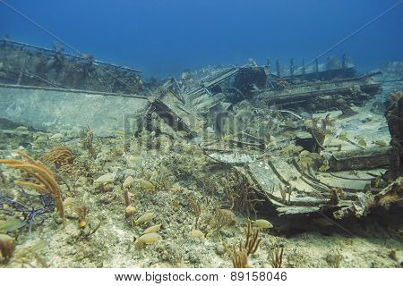 Multiple species of fish living in a wreck poster