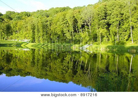 Landscape with trees reflection in the water