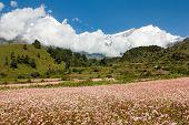 Mount Dhaulagiri - view from annapurna himal to dhaulagiri himal with buckwheat field near Kali Gandaki river Nepal poster