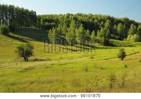 Quiet Green Summer Hill Slope With Trees In The Morning