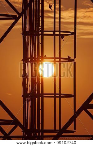Sun In Cage With Birds