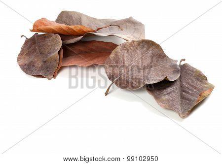 Dry Autumn Magnolia Leaves