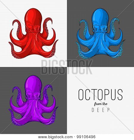 Vector drawing illustration of octopus with curling tentacles