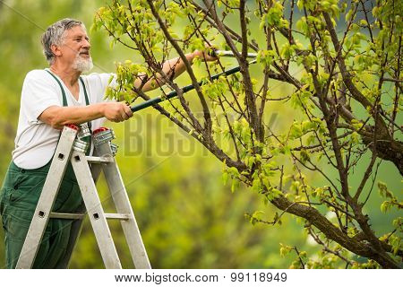 Senior man gardening in his garden (color toned image)