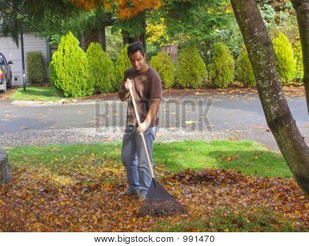 Homeowner Gardening
