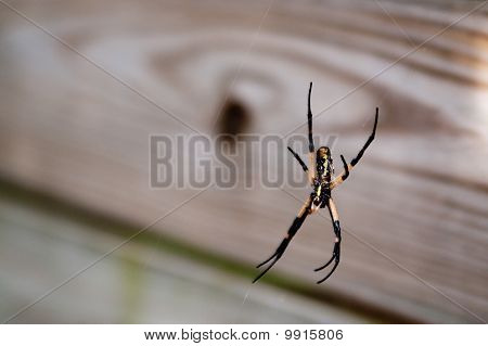 Black and Yellow Garden Spider on web on a deck poster