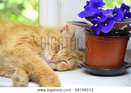 Sleep Ginger Cat On A Window Sill