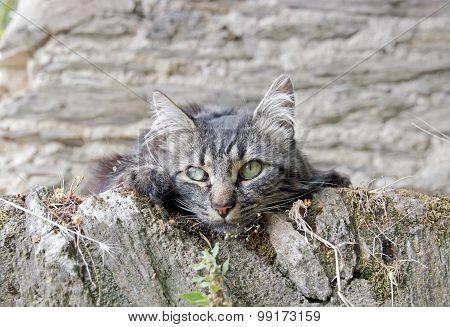 portrait of a little gray cat, kitten walls