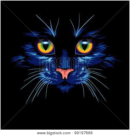 Dark blue cat with bright eyes