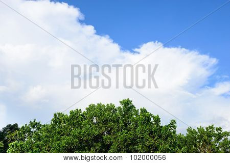 Trees On Sky Background