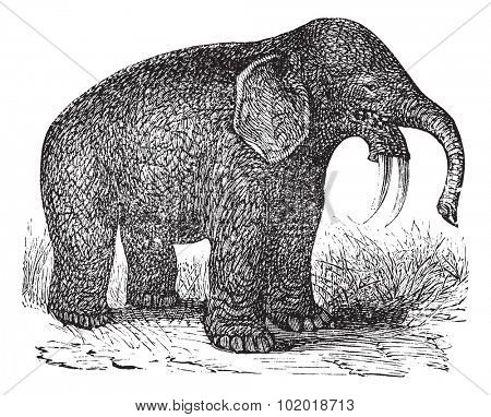 Dinotherium or Hoe Tusker or Dinotherium giganteum, vintage engraving. Old engraved illustration of a Dinotherium. Trousset Encyclopedia