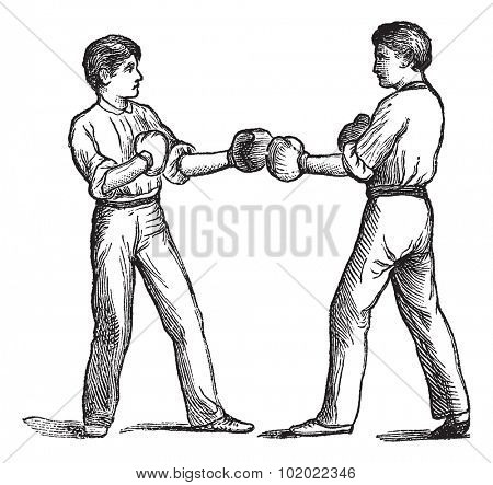 Two boxers in a fighting postion, vintage engraving. Old engraved illustration of two boxers in a fighting postion. Trousset encyclopedia (1886 - 1891).