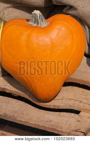 heart pumpkin in autumn for holidays and halloween