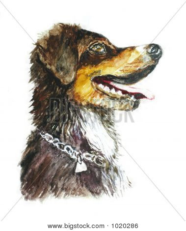 young and beatiful isolated dog draw by myself poster