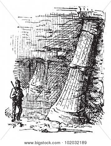 Sigillaria, vintage engraved illustration. Dictionary of words and things - Larive and Fleury - 1895.