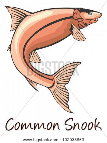Common Snook, Color Illustration