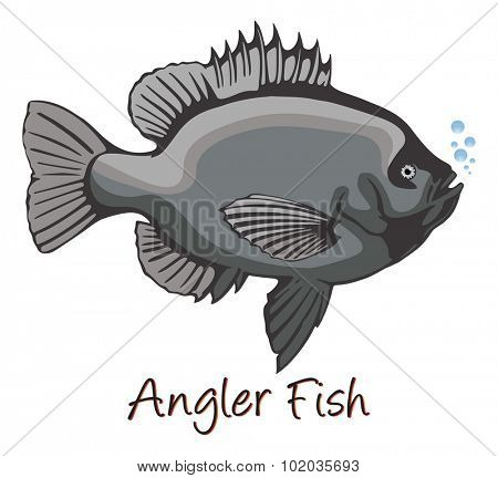Anglerfish, Color Illustration