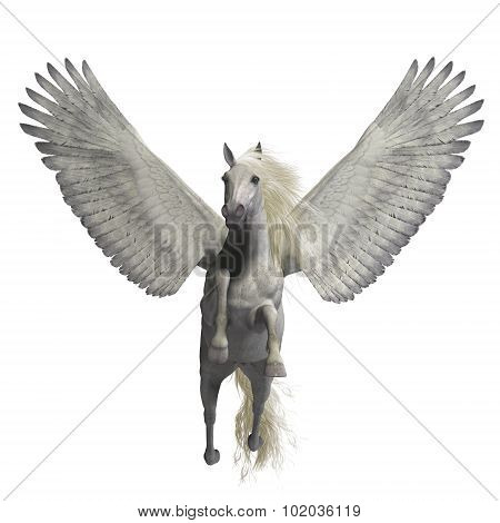 White Pegasus On White