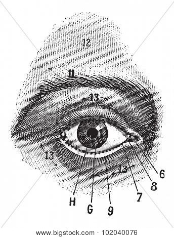 External View of the Human Eye, showing pupil, iris, sclera and eyelid, vintage engraved illustration. Dictionary of Words and Things - Larive and Fleury - 1895