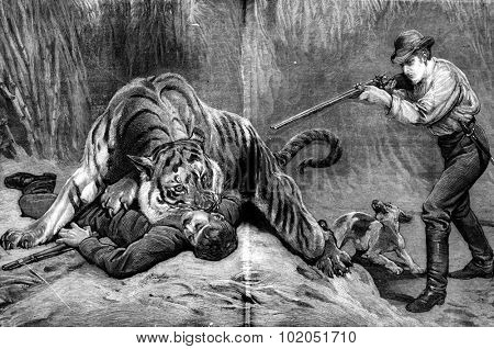 The lair of the tiger. The tiger jumped and jumped at the throat of his enemy, vintage engraved illustration. Journal des Voyage, Travel Journal, (1880-81).