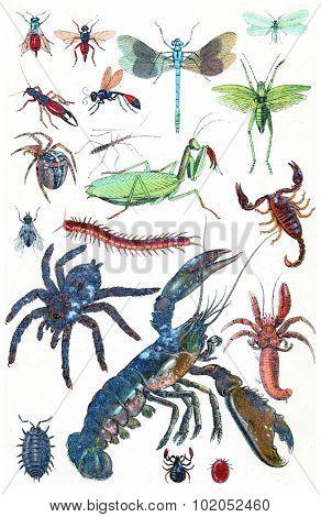 Insects and crustacean, vintage engraved illustration. La Vie dans la nature, 1890.  poster