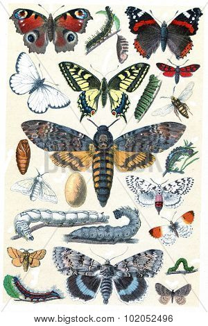 Butterfly collection, vintage engraved illustration. La Vie dans la nature, 1890.