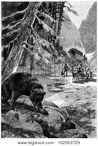 The bear shook his big head one last time, vintage engraved illustration. Jules Verne Cesar Cascabel, 1890.