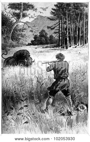 The beast, wounded only, returns to him, vintage engraved illustration. Jules Verne Cesar Cascabel, 1890.