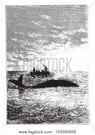 The whale stood one cable, vintage engraved illustration.  Jules Verne, a 15 year old captain.
