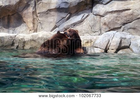 Cavorting Grizzly Bears