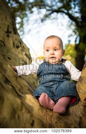 Fear - baby on big tree