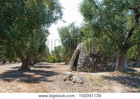 Typical Trullo Construction In Apulia Rural Area