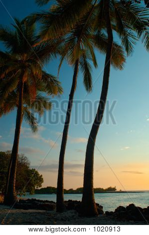 Tropical Sunset Picture