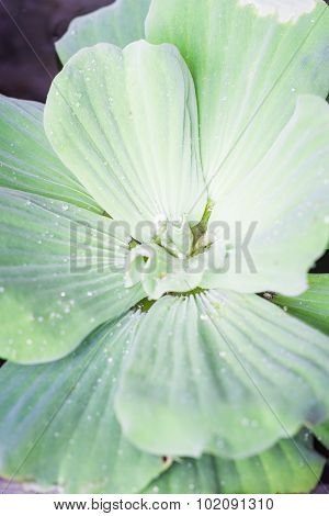 Green Leaves Close-up Natural Background