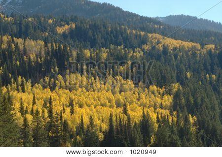 Fall In Utah Mountains