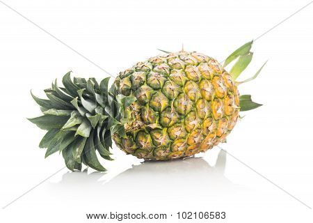 Fresh Whole Juicy And Nutritious Pineapple Fruit Against White Background.