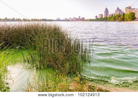 Traces Of Pollution And Green Algae In The Dnieper In Kiev