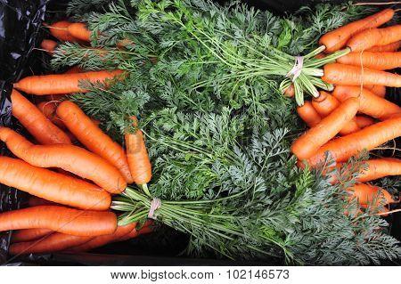 Oraganic Carrots