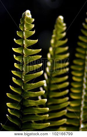 Photo of a Native fern in New Zealand.