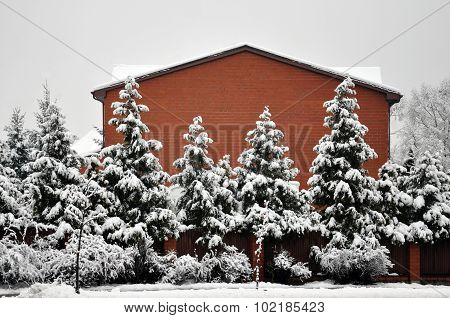 Frosted trees and red brick cottage