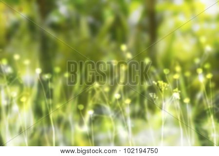 Sunny summer day with green flowers and plants.