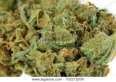 Dry medical cannabis close up