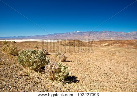 Creosote Over Death Valley